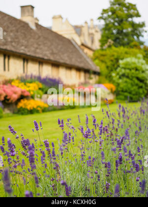 Beautiful lavender flowers in the garden against the blurred background. - Stock Photo