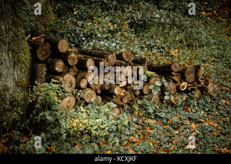 Pile of sawn lumber in forest - Stock Photo