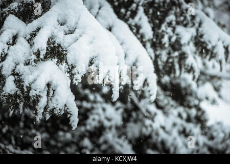 Wood tree in a park in winter covered with snow - Stock Photo