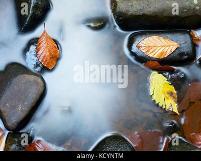 Fall colors. Detail of rotten old leaves  on basalt gravel in mirrored water of mountain stream. Vivid colorful - Stock Photo