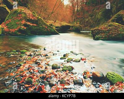 Stony bank of autumn mountain river covered by orange beech leaves. Fresh colorful leaves on branches above water - Stock Photo