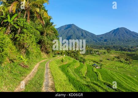 Beautiful Jatiluwih Rice Terraces in Bali, Indonesia - Stock Photo