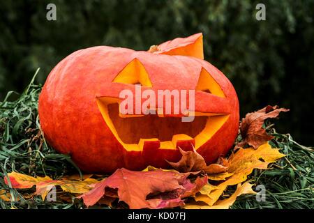 Halloween Pumpkin on autumn dry leaves. Close-up - Stock Photo