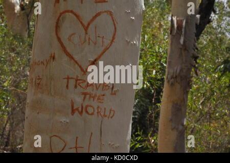 Tree Graffiti, Bowling Green Bay National Park (Alligator Creek), Townsville, QLD, Australia - Stock Photo