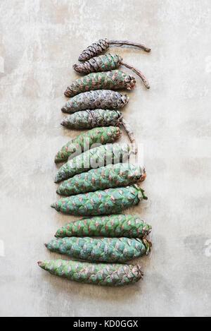 Pine cones arranged in row - Stock Photo