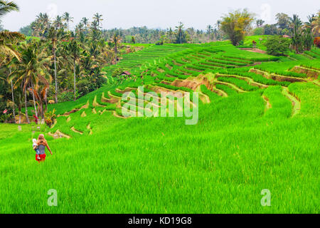 Mother with baby son walk in terrace plantation with growing green rice. Beautiful view of traditional fields. Family - Stock Photo