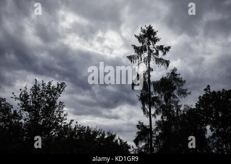 Trees against cloudy sky - Stock Photo