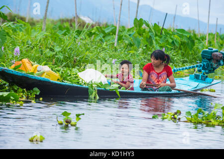 Intha people working on there floating garden in Inle lake Myanmar - Stock Photo