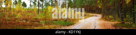 Coniferous forest with morning sun shining - Stock Photo
