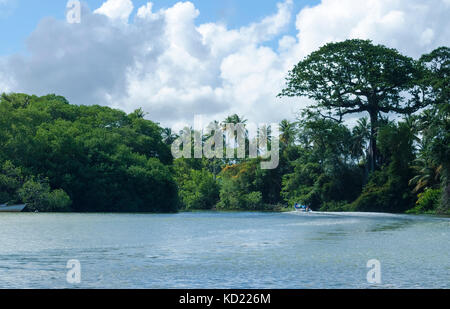 Going up the Nariva River on the east coast of Trinidad on a sunny day. - Stock Photo