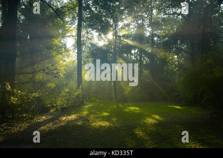 Early morning sun rays shining through wooded area. - Stock Photo