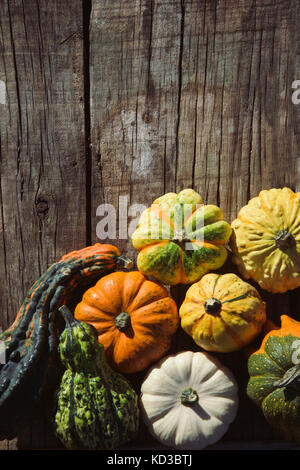 high-angle shot of an assortment of different pumpkins on a rustic wooden table with a blank space on top - Stock Photo