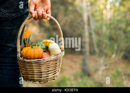 closeup of a young caucasian man carrying a worn wicker basket with an assortment of different pumpkins in a farm - Stock Photo