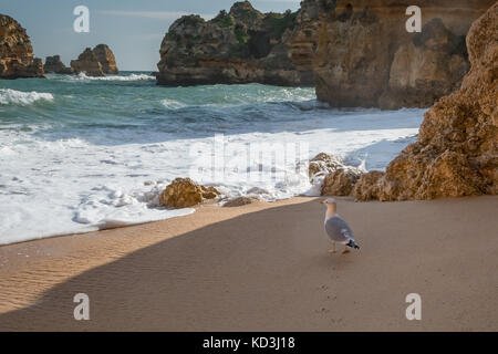 Sea bird walking along sandy beach surrounded by high cliffs, rock formations - Stock Photo