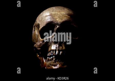 Real human skull on black background