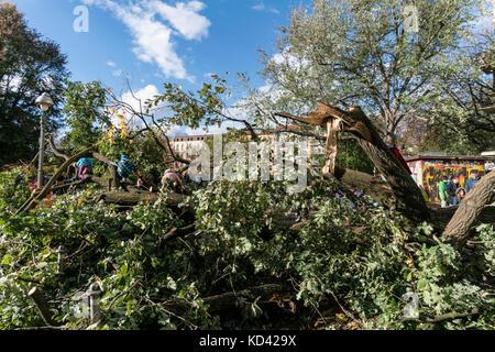 Storm Xavier, damage by falling tree | Sturmtief  Xavier wuetet ueber Deutschland am 5.10.2017 , Kinder kletterm - Stock Photo