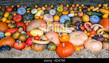 Large assorted collection of colourful pumpkins, squashes and gourds - Stock Photo