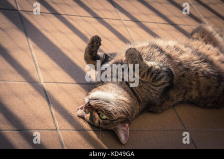 Cat playing on a balcony - Stock Photo