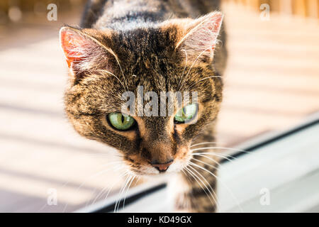 Cat interested in something on the floor. Cat saw something. - Stock Photo