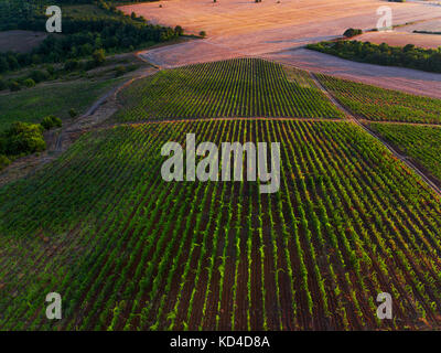 Aerial view over vineyard in Europe. - Stock Photo