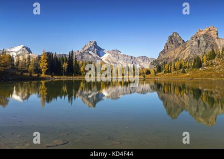 Autumn Landscape and Distant Rocky Mountain Tops as Golden Larches are Changing Colors at Lake O'Hara, Yoho National - Stock Photo