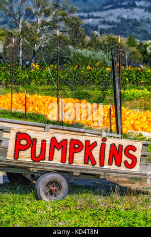 Roadside cart with a handmade sign in bright red letters advertising pumpkins for sale. Pumpkin patch in the background. - Stock Photo