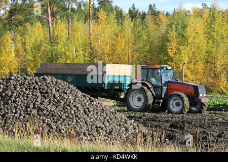 SALO, FINLAND - OCTOBER 6, 2017: Pile of harvested sugar beet and behind, Valmet 8200 agricultural tractor and trailer - Stock Photo