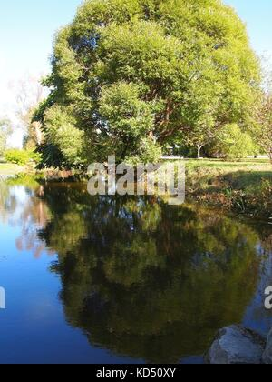 Tree reflected in water at the Arboretum, Ottawa, Ontario, Canada. - Stock Photo