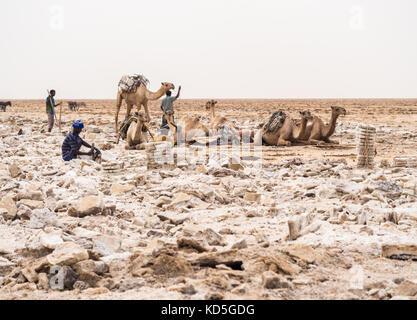 DANAKIL DEPRESSION, ETHIOPIA - JUNE 29, 2016: Afar man mining salt from salt flats in Afar region, Danakil Depression, - Stock Photo