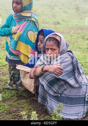 SEMIEN MOUNTAINS, ETHIOPIA - JULY 01, 2016: Children in Semien Mountains, Ethiopia, on a foggy day. - Stock Photo