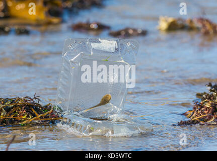 Discarded plastic food container washed up on a beach by the sea in the UK. Sky ocean rescue. - Stock Photo