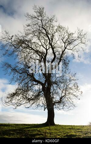 isolated tree watching the world go by - Stock Photo