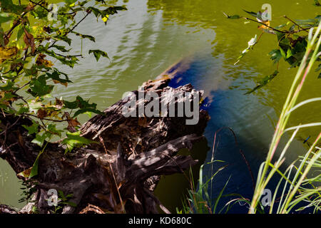 Tree and water - Stock Photo