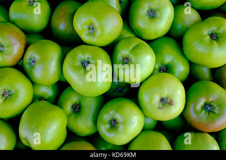 green bramley cooking apples - Stock Photo