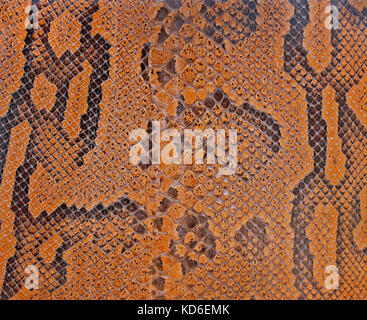 Close up of snake skin texture background