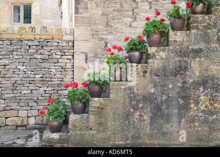 Potted geraniums / pelargonium flowers on stone steps in the village of Withington, Cotswolds, Gloucestershire, - Stock Photo
