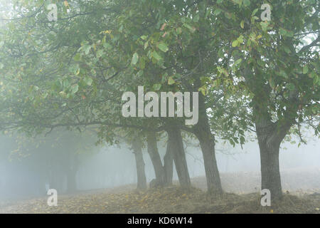 Morning in a foggy forest, traveling around Armenia horizontal - Stock Photo