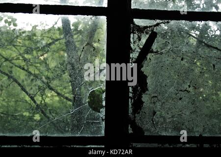 Looking Out Through A Dirty Cracked Window Into AN Old Forest - Stock Photo