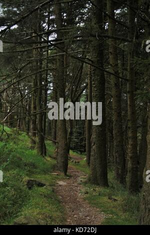 Mountain Bike Trail Through The Trees In Rostrevor Forest, Northern Ireland - Stock Photo