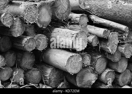 Piled Up Cut Logs In Gosford Forest, Northern Ireland - Stock Photo