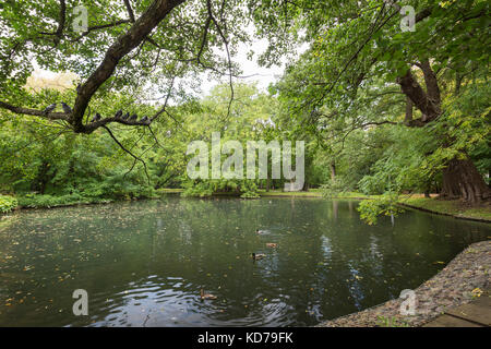 View of lush trees and a small pond at the Oliwa Park (Park Oliwski). It's a public park in Gdansk, Poland. - Stock Photo