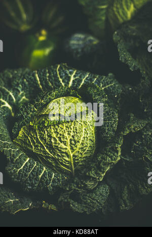 Close-up of raw fresh green cabbage texture and background over dark background, selective focus, vertical composition - Stock Photo