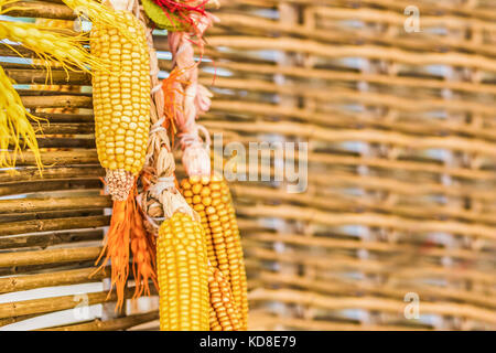 Corn as a decoration hanging on fence - Stock Photo