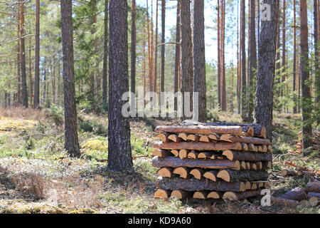 Stack of pine firewood in spring forest on a beautiful day. - Stock Photo