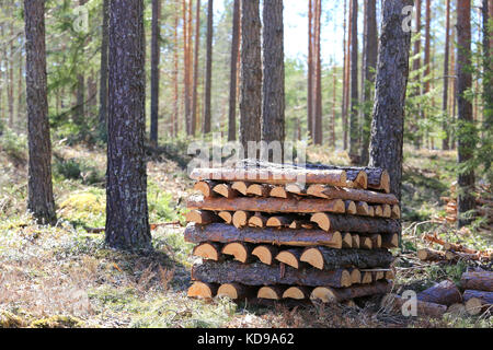 Pile of neatly stacked pine firewood in forest. Shallow dof, bokeh effect in woodland. - Stock Photo