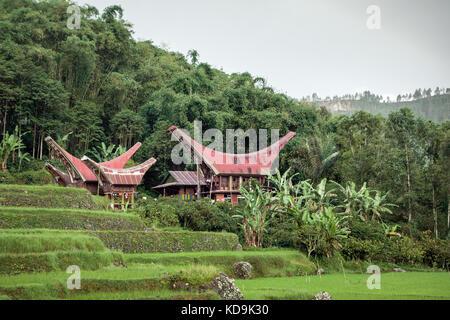 Toraja culture and Tana Toraja landscape. Unique traditional Tongkonan houses stand amidst tropical vegetation in - Stock Photo