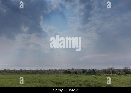 African green field in angola. Dramatic sky. - Stock Photo