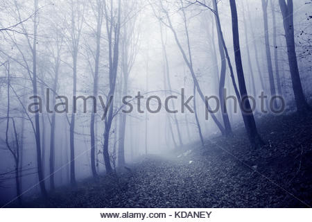Pink blur colored foggy and scary forest trees with mysterious forest path. Pink blue color tone used. - Stock Photo