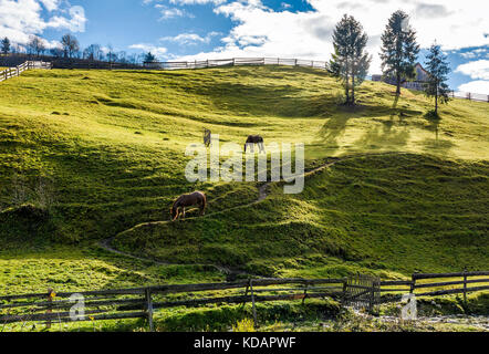 horses grazing on the gassy slope near the trees. beautiful sunny autumn day in rural area - Stock Photo