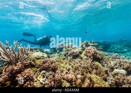 Divers exploring the coral formations of Agincourt Reef, Great Barrier Reef Marine Park, Port Douglas, Queensland, - Stock Photo